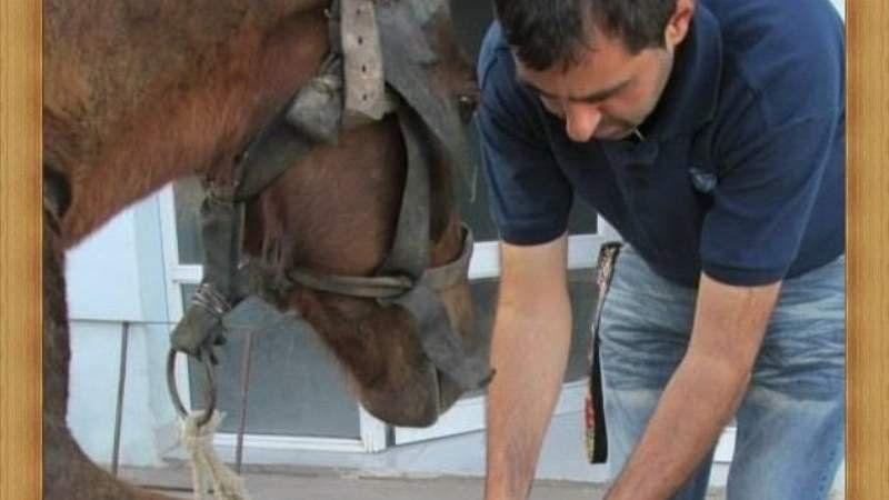 Detuvieron a un carrero por maltratar a su caballo
