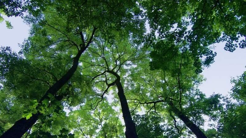 Semana del árbol en Esteban Echeverría