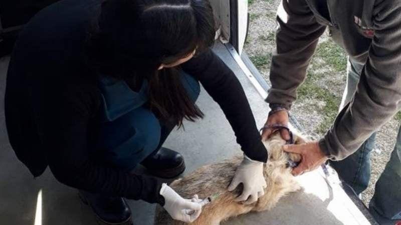 Se viene una doble jornada de vacunación gratuita para mascotas