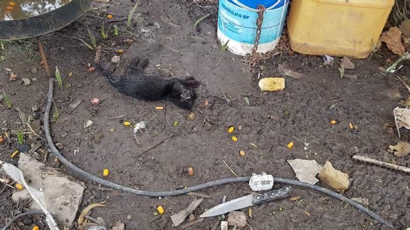 Robo violento en Domselaar: golpearon y ataron a un discapacitado y mataron mascotas