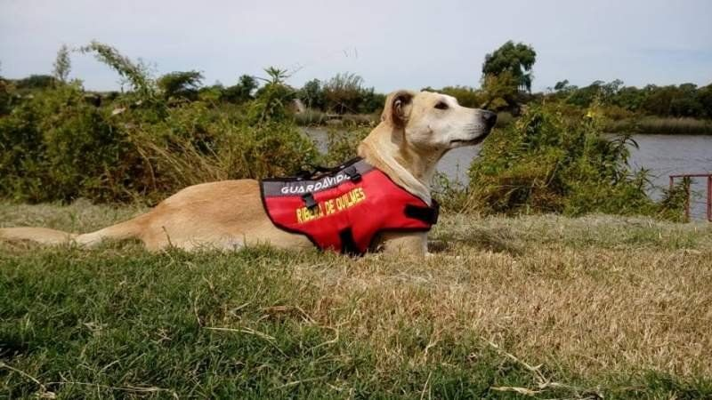 Quilmes: Hacen una colecta para ayudar a un perro guardavidas