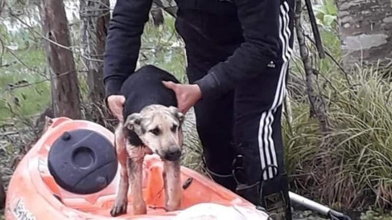 Emotivo: los Bomberos de San Vicente rescataron a un perro con un kayak