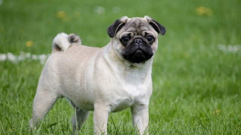 Apareció en Monte Grande el perro terapéutico que se habían robado en un golpe comando