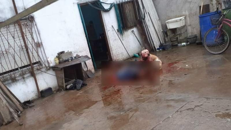 Un pitbull mató a un joven con síndrome de down en Longchamps