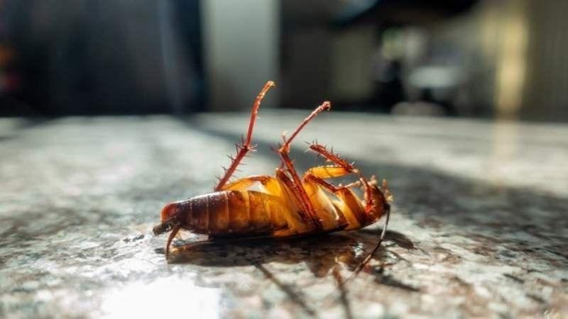 La Anmat alertó a la población sobre el uso de un insecticida