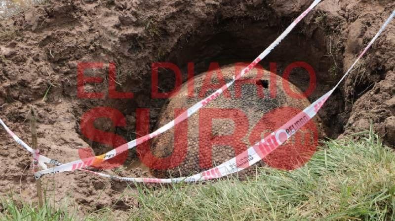 Encontraron el caparazón de un gliptodonte en Ezeiza