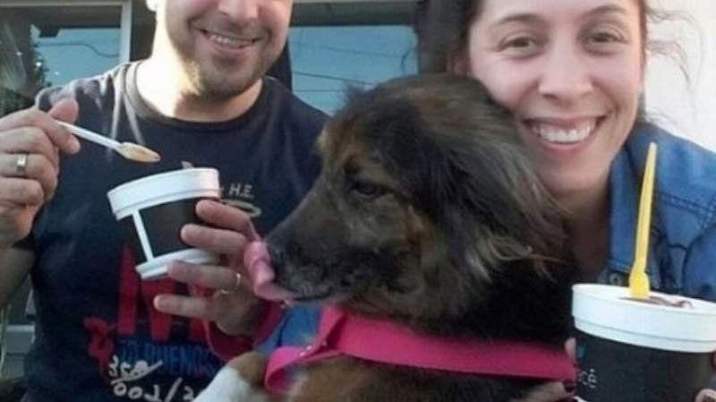 Organizan una masiva búsqueda para encontrar a Mora, la perra que se perdió en el Aeropuerto de Ezeiza