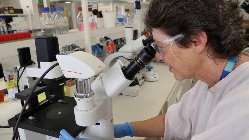 Prueban la efectividad de un antiparasitario animal como cura del coronavirus