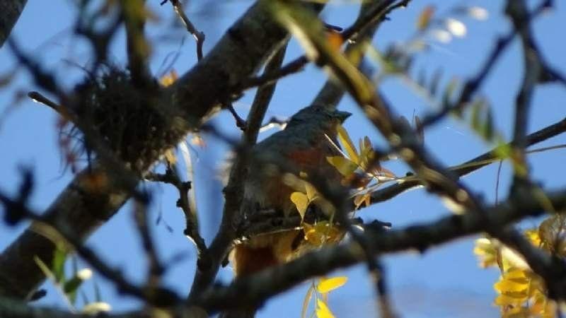 Efecto cuarentena en la laguna de San Vicente: las aves y otros animales que se ven