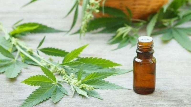 Ordenan a una obra social garantizarle el cannabis medicinal a una paciente