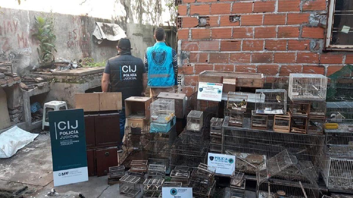 Lomas: cayó una red de casa furtiva de aves y hay dos detenidos por maltrato animal