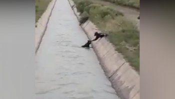 Video: el rescate de un perrito caído en un zanjón que se volvió viral