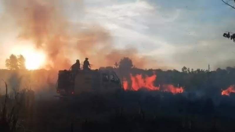 Ezeiza en llamas: Las altas temperaturas provocaron cuatro incendios forestales