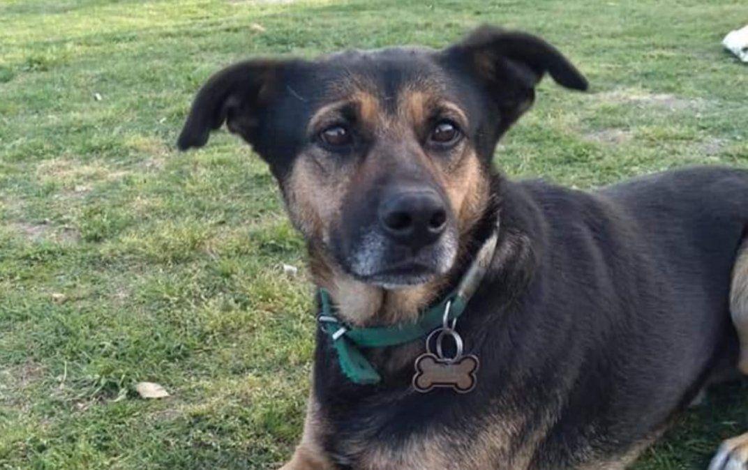Angustia de vecinos de Llavallol: buscan al perro que vivía en el Parque Municipal