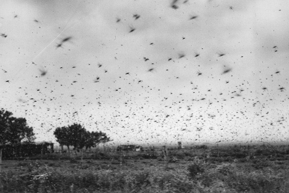 El día que una plaga de langostas invadió Lomas de Zamora