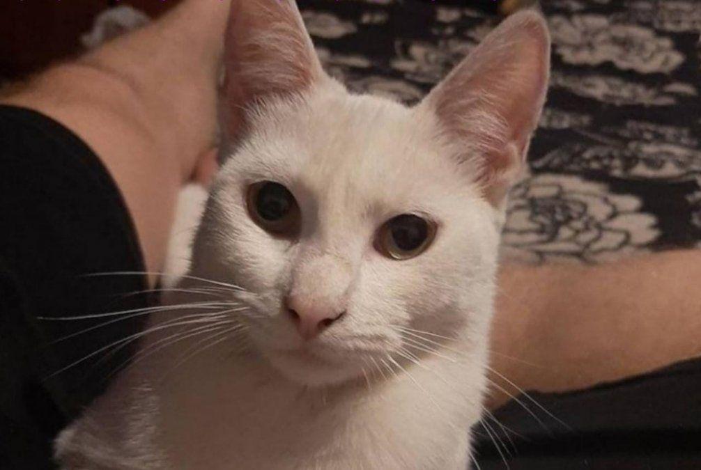 Brown: le robaron a su gata y ofrece recompensa para recuperarla