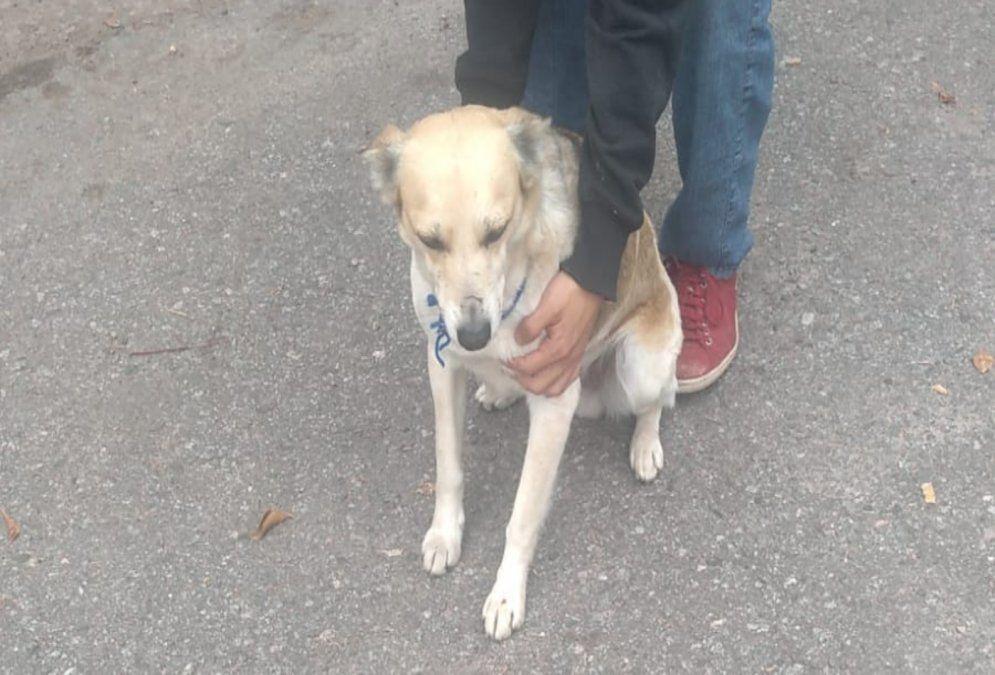 Uno de los perros envenedados del barrio.