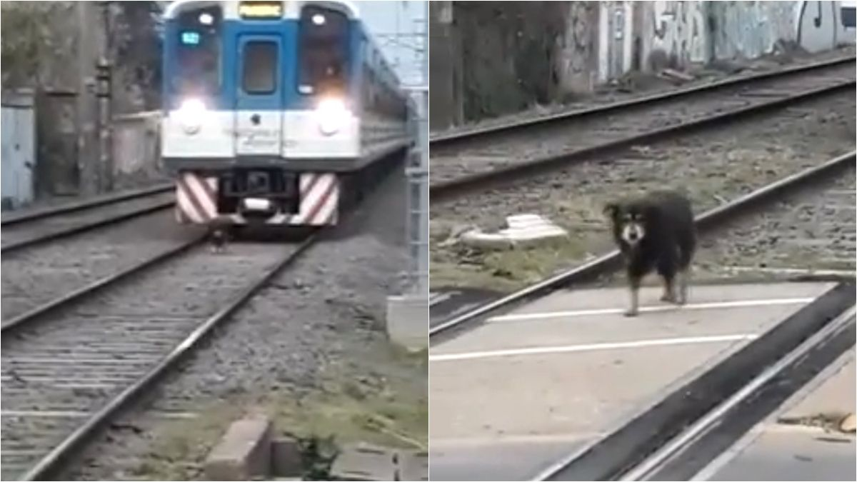 Adrogué: un perro que caminaba por las vías generó demoras en el Tren Roca