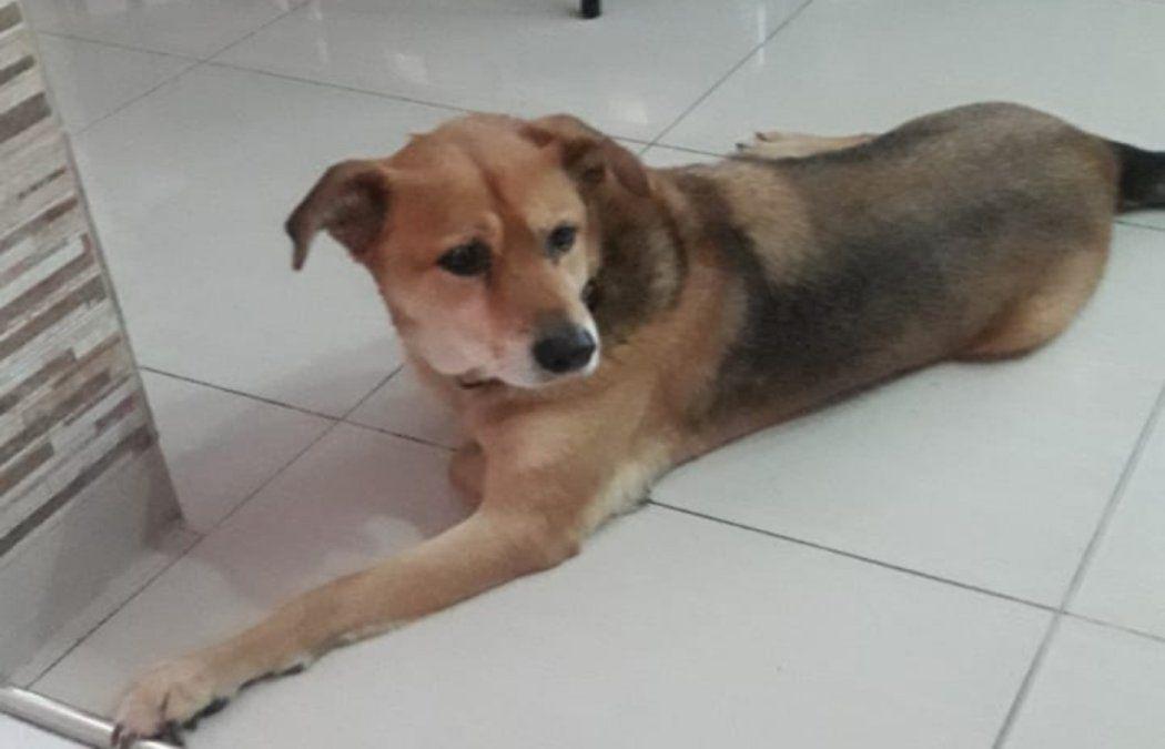 Foto de Ramiro un perro que falleció por envenenamiento en Lanús.