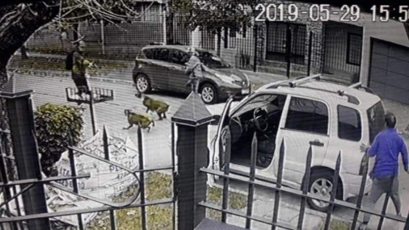 Video: intentaron robarle y lo salvaron sus perros