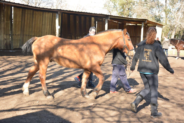 robaron caballos que se usaban para equinoterapia con ninos discapacitados