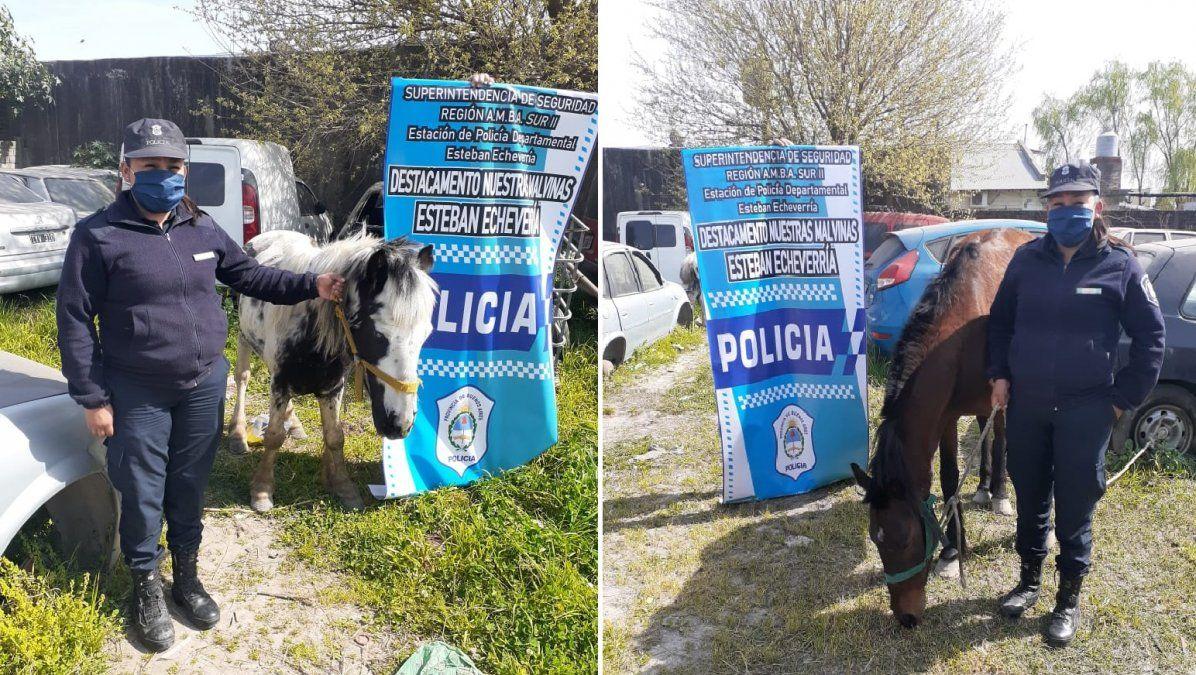 9 de Abril: dos caballos rescatados y tres ladrones detenidos