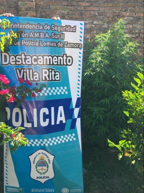 Lomas: Perseguían a un ladrón y descubrieron varias plantas de marihuana en una casa