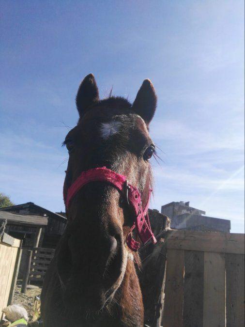 Rescataron a un caballo que era usado para cometer robos en Burzaco