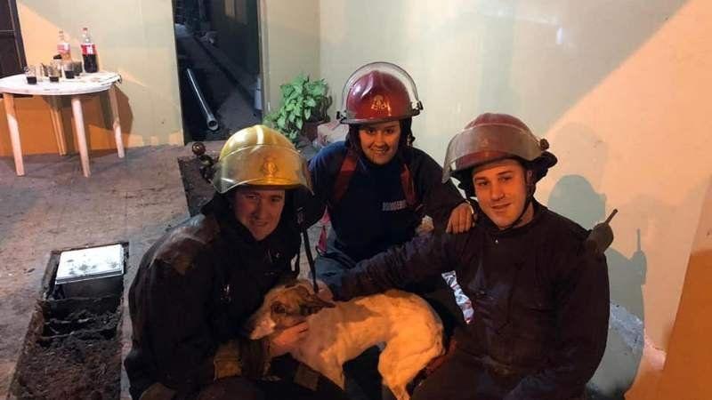 Los Bomberos de Almirante Brown salvaron a un perro que estaba dentro de un pozo