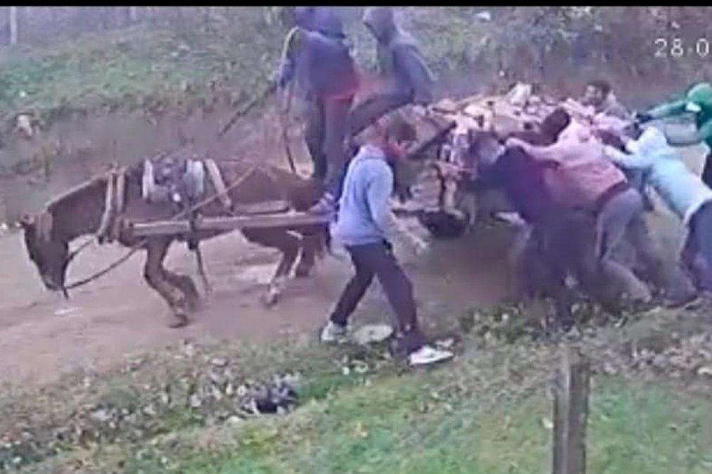 Ezeiza: rescataron a un caballo maltratado y la denunciante fue amenazada de muerte
