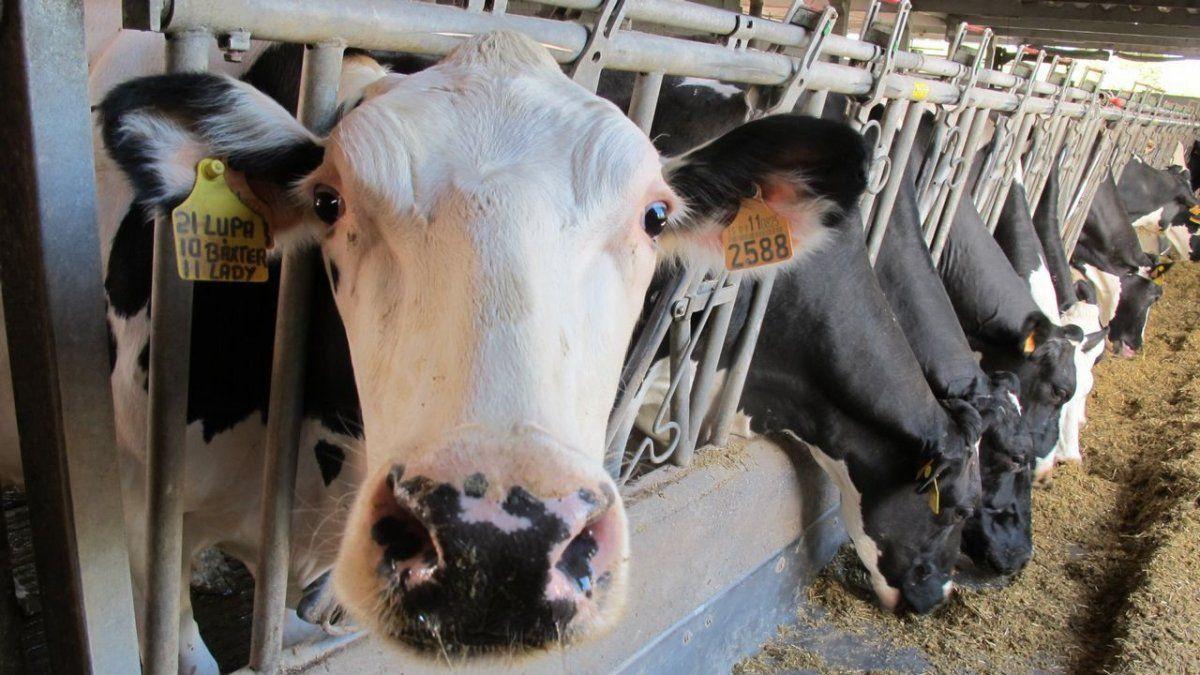 Empresas de la industrias de la leche advirtieron por posible desabastecimiento.