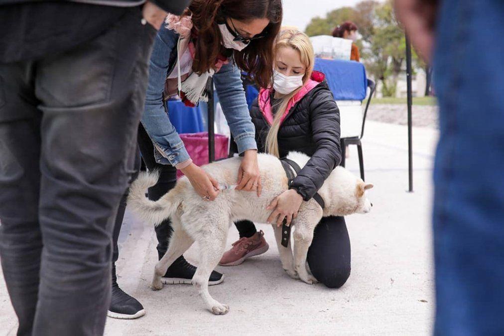 Zoonosis estará brindando atención a mascotas en la Plaza Libertad de Lomas de Zamora.