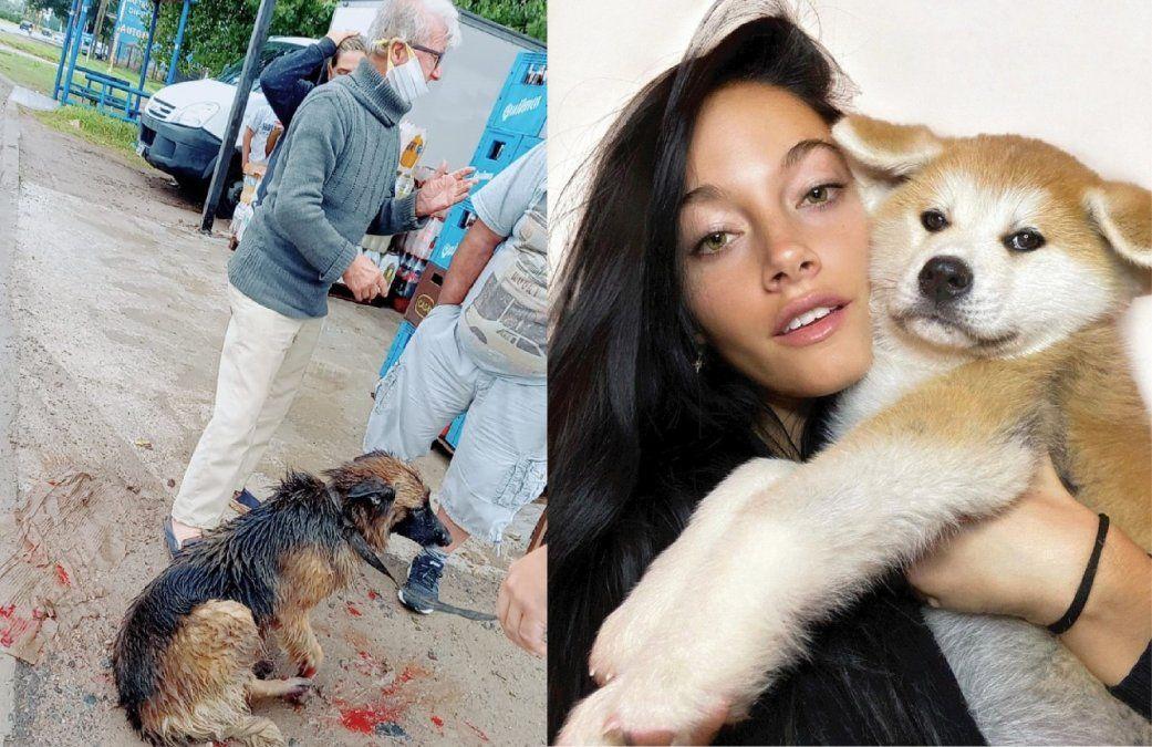 Oriana Sabatini, indignada con el maltratador de perros de Guernica: qué dijo